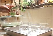 プリン液を器に流し入れる